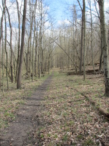 Flat, wooded section of the River Ridge Backpack Trail, Backpacking Forest Glen Preserve